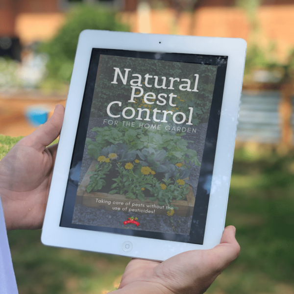 natural pest control ebook on ipad screen in garden